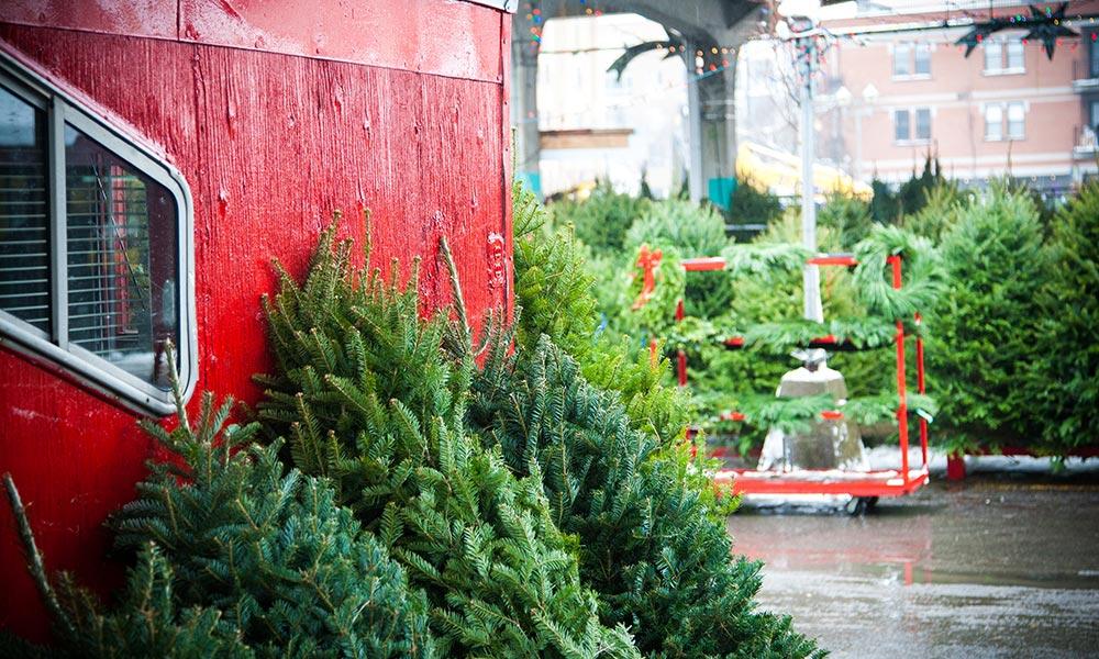 Christmas Tree Producers Part - 37: Sapins De Noël
