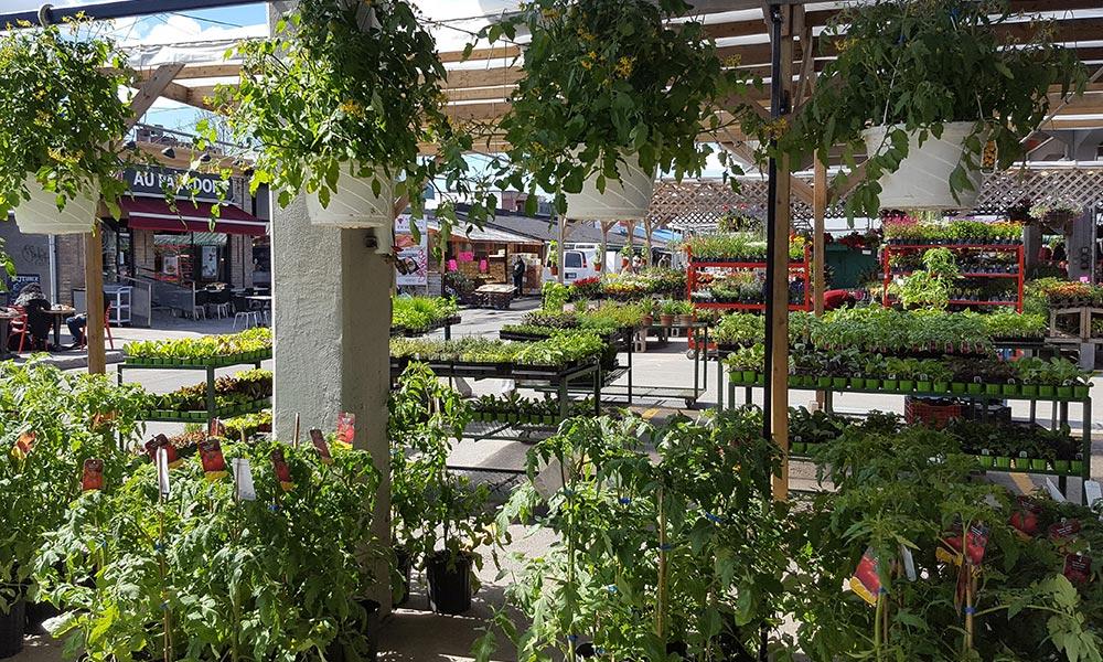 Vegetable Or Fruit Hanging Basket,