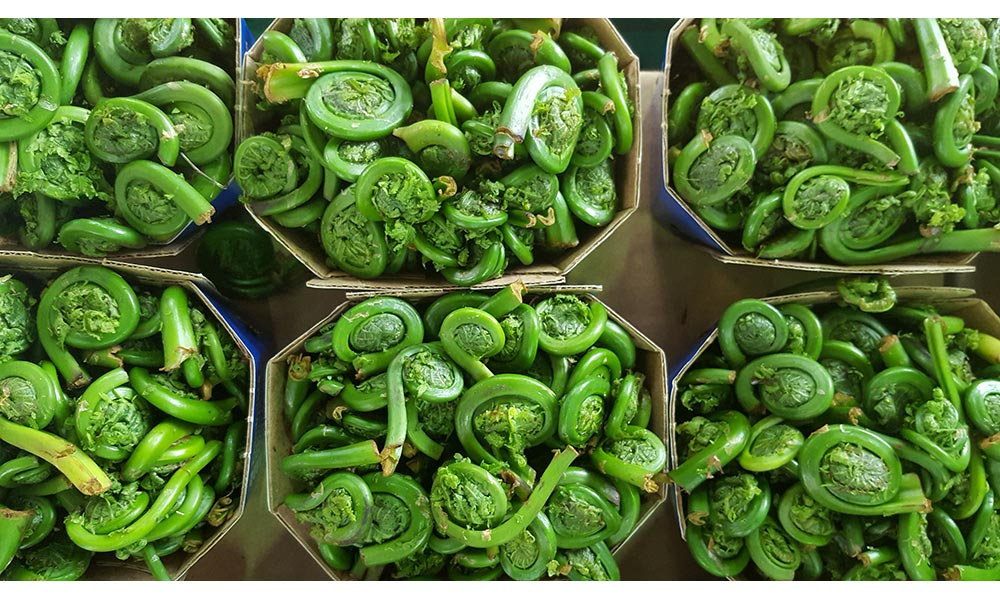 Fiddlehead, Fruits et légumes
